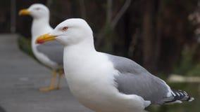 Feche acima das gaivotas Roma Itália filme