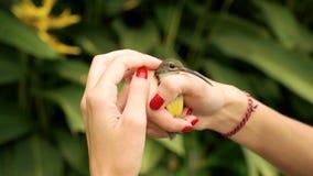 Feche acima das mãos da mulher que guardam o sunbird azeitona-suportado video estoque