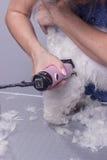 Feche acima das mãos da tosquiadeira da guarnição da pele do cabelo de cão Imagem de Stock Royalty Free