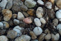Feche acima das pedras redondas da cor com algas Foto de Stock Royalty Free