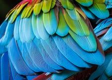 Feche acima das penas do papagaio para o fundo Fotos de Stock Royalty Free