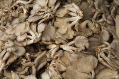 Feche acima das pilhas dos cogumelos Fotografia de Stock