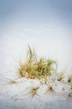 Feche acima das plantas no parque nacional das areias do branco Fotos de Stock
