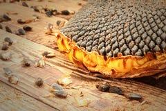Feche acima das sementes no girassol Foto de Stock Royalty Free