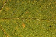Feche acima das texturas da folha do outono imagem de stock