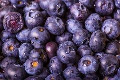 Feche acima das uvas-do-monte Imagens de Stock Royalty Free