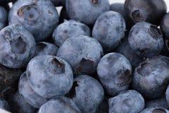 Feche acima das uvas-do-monte foto de stock