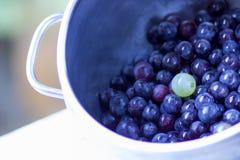 Feche acima das uvas pretas da morango em um potenciômetro e em um branco imagens de stock royalty free