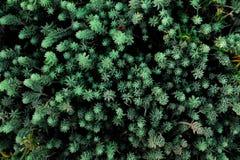 Feche acima de amarelo bonito e a criança cor-de-rosa de Julia aumentou no jardim Feche acima do fundo da planta verde foto de stock