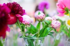 Feche acima de botão cor-de-rosa fechado no vaso, foco seletivo da peônia imagens de stock royalty free