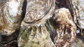 Feche acima de diversas ostras frescas na água corrente filme