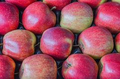 Feche acima de muitas maçãs Foto de Stock Royalty Free