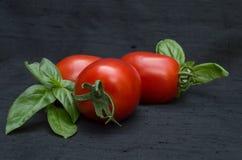 Feche acima de três tomates e de Basil Against um fundo preto Fotografia de Stock