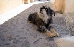 Feche acima de um cão Foto de Stock