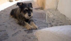 Feche acima de um cão Imagens de Stock Royalty Free