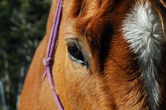 Feche acima de um cavalo Fotografia de Stock Royalty Free
