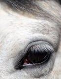 Feche acima de um cavalo \ do \ \ \ olho do ` s Imagens de Stock