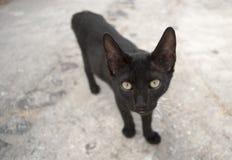 Feche acima de um gato preto Fotos de Stock Royalty Free
