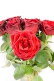 Feche acima de um grupo de escuro bonito - rosas vermelhas imagem de stock royalty free
