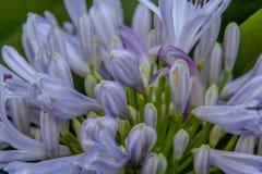 Feche acima de um grupo fantástico de flores foto de stock