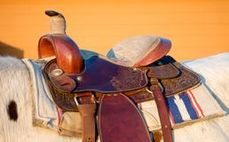 Feche acima de um longhorn Fotografia de Stock Royalty Free