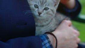 Feche acima de um vaquinha-gato bonito nas mãos da mulher vídeos de arquivo