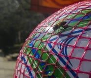 Feche acima de uma água potável sedento da abelha em uma bola plástica Conceito para a adaptação ambiental imagens de stock royalty free