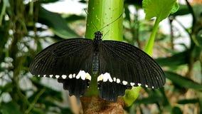 Feche acima de uma borboleta bonita na natureza imagens de stock royalty free