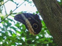 Feche acima de uma borboleta bonita no papiliorama foto de stock royalty free