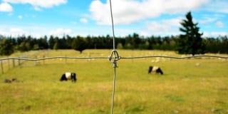 Feche acima de uma cerca da exploração agrícola com o gado no fundo Imagens de Stock Royalty Free