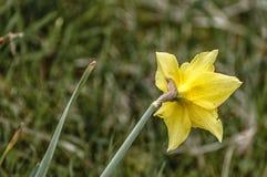 Feche acima de uma flor amarela bonita imagens de stock