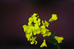 Feche acima de uma flor amarela bonita que floresce no verão com fundo desvanecido foto de stock royalty free