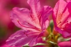Feche acima de uma flor bonita Imagens de Stock