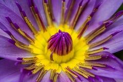 Feche acima de uma flor bonita Fotos de Stock Royalty Free
