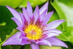 Feche acima de uma flor bonita Fotos de Stock