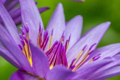 Feche acima de uma flor bonita Imagens de Stock Royalty Free