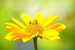 Feche acima de uma flor bonita foto de stock