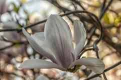 Feche acima de uma flor branca bonita fotos de stock