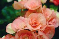 Feche acima de uma flor usada como um fundo romântico fotos de stock