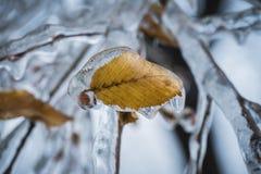 Feche acima de uma folha amarela bonita do outono preservada no gelo claro após uma chuva congelada imagem de stock