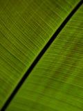 Feche acima de uma grande folha verde Fotos de Stock