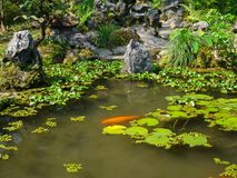 Feche acima de uma lagoa artificial no pátio com natação dos peixes do koi, na cidade da matiz, em Vietname Foto de Stock