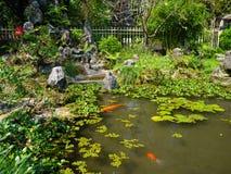 Feche acima de uma lagoa artificial no pátio com natação dos peixes do koi, na cidade da matiz, em Vietname Imagem de Stock