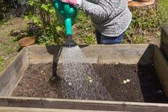 Feche acima de uma mulher que trabalha no jardim e plante vegetais Imagem de Stock Royalty Free