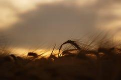 Feche acima de uma palha do feno no por do sol Foto de Stock