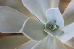 Feche acima de uma planta carnuda imagens de stock royalty free