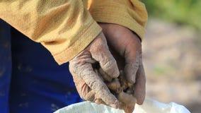 Feche acima do amendoim na mão do fazendeiro. filme