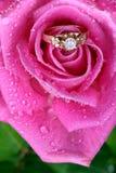 Feche acima do anel de ouro na cor-de-rosa levantou-se imagens de stock