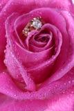 Feche acima do anel de ouro na cor-de-rosa levantou-se imagem de stock royalty free