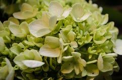 Feche acima do arranjo floral bonito, arranjo floral do casamento fotografia de stock royalty free